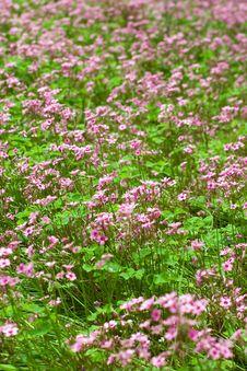 Free Flowers Royalty Free Stock Photos - 5519588