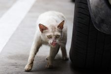 Free Aggressive Cat Stock Photography - 5519842