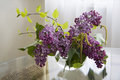 Free Beautiful Lilac Flowers Closeup Royalty Free Stock Images - 55109419