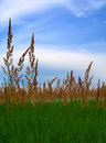 Free Grass And Sky Royalty Free Stock Photography - 5520417