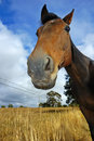 Free Curious Horse Stock Photography - 5520822