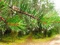 Free Pine Tree Stick Stock Photo - 5523660