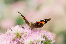 Free Butterfly Stock Photo - 5520160