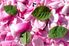 Petals Stock Photos