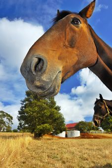 Free Smiling Horse Stock Photo - 5520860