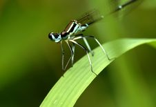 Free Dragonfly S Face Royalty Free Stock Photo - 5520945
