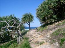 Free Pandanas Grove, Stradbroke Island Royalty Free Stock Image - 5521076