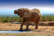 Free Elephant (Loxodonta Africana) Stock Photo - 5521320
