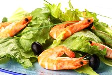 Free Shrimp Salad Stock Image - 5521581