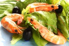 Free Shrimp Salad Stock Photography - 5521732