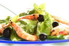 Free Shrimp Salad Stock Photo - 5521760