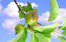 Free Apples On Blue Sky Royalty Free Stock Photography - 5521917