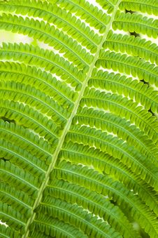 Free Fern Leaves Royalty Free Stock Photos - 5522328