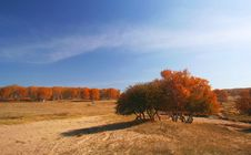 Free Autumn Royalty Free Stock Photography - 5522517