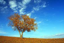 Free A Tree Royalty Free Stock Photos - 5522528