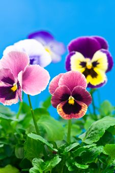 Free Colorful Flowers Stock Photos - 5522793
