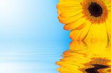 Free Beautiful Gerbera Royalty Free Stock Images - 5523069