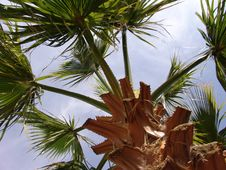 Free Palm Leaves In Sunshine Stock Photography - 5523182