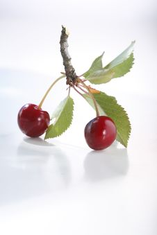 Free Sour Cherry Royalty Free Stock Images - 5523299