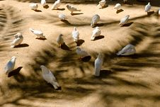 Free Many White Doves In The Park Stock Photos - 5523923