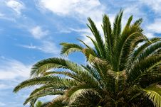 Free A Palm On The Sea Stock Images - 5523934