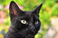 Free The Cat Stock Photos - 5524053