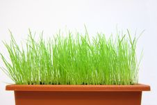 Free Green Grass Stock Image - 5526361