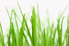 Free Green Grass Stock Photography - 5526392