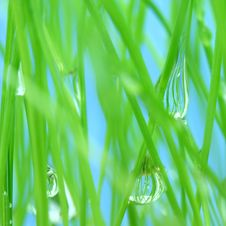 Free Green Grass Royalty Free Stock Photos - 5526498