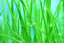 Free Green Grass Stock Photos - 5526513