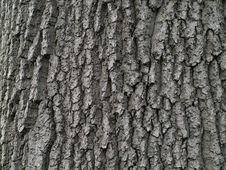 Free Tree Bark Stock Photos - 5526763