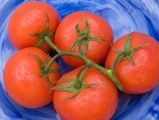 Free Five Tomatoes On Blue. Royalty Free Stock Image - 5527086