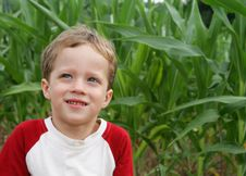 Free The Corn Field Royalty Free Stock Photography - 5527667