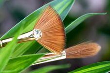 Finest Paintbrushes Royalty Free Stock Images