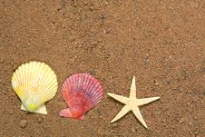 Free Seashells And Star On Sand Royalty Free Stock Images - 5528599