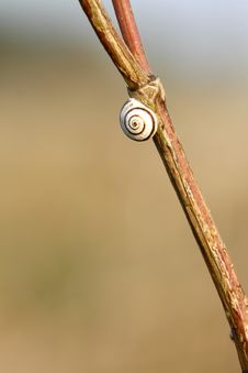 One Snail Stock Photography