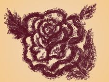 Rose Sketch Stock Images
