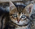 Free Adorable Kitty Stock Photos - 5531303