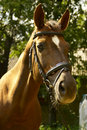 Free Red Horse Stock Photos - 5535313