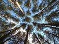 Free Tree Tops Stock Photos - 5537903