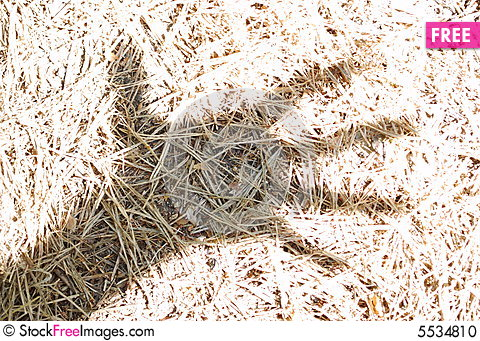Free Dead Fir-needles In The Hand Shade Stock Photo - 5534810