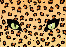 Free Skin And Eye Of The Jaguar Royalty Free Stock Image - 5530906