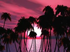 Free Palms Tops Royalty Free Stock Photo - 5530965