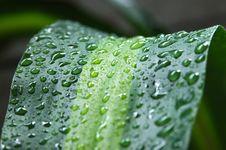 Free Wet Leave Stock Photo - 5532210