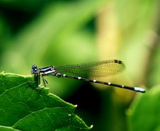 Dragonfly Holding On Royalty Free Stock Photography