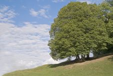 Free Tree And Sky Royalty Free Stock Image - 5532296