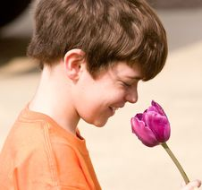 Free Little Boy With A Flower Stock Images - 5532964
