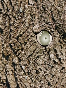 Free An Eye In A Tree Stock Photos - 5534303