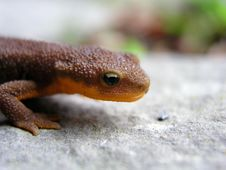 Free Close Up Lizard Stock Photography - 5534532