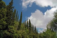 Free View Of Cyprus Forest In Greek Island Stock Images - 5534774